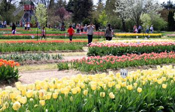 鬱金香花園(Veldheer Tulip Garden)的花海